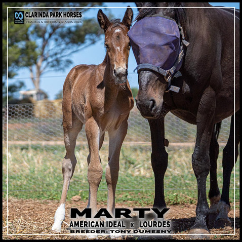 American Ideal colt out of champion race mare Lourdes