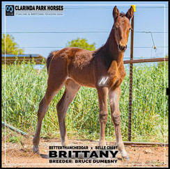 Betterthancheddar filly out of Belle Crest