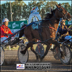 WHY NOT SURF, driven by Brett Hutchings, wins at Parkes Trots