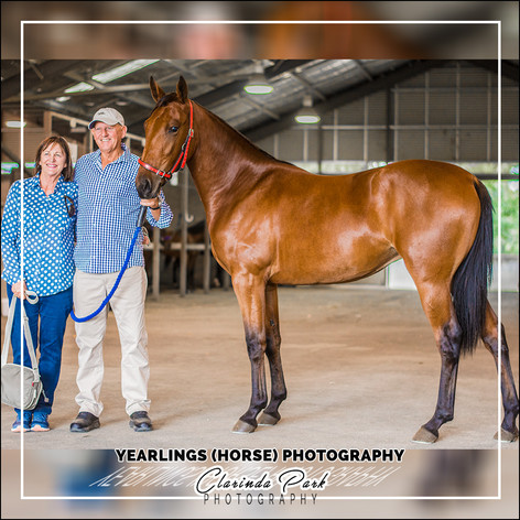 YEARLINGS (HORSE) PHOTOGRAPHY