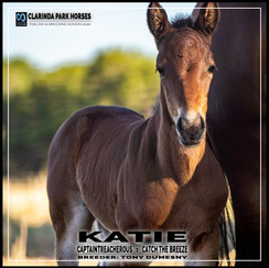Captaintreacherous filly out of Catch The Breeze