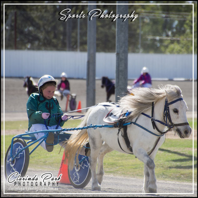 New South Wales Mini Trotting Association - The Championships 2019