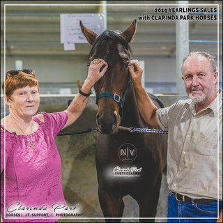 2019 Bathurst Gold Crown Yearlings Sale. Berg with his new owners