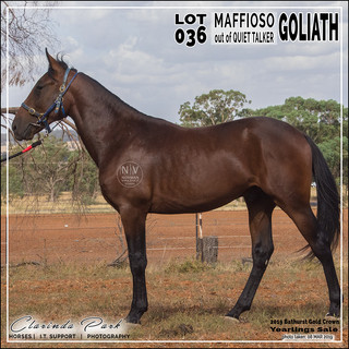 2019 Bathurst Gold Crown Yearlings Sale - Lot 036