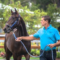 Clarinda Park Horses handles and prepares yearlings for the APG Sydney Yearlings Sale 2018