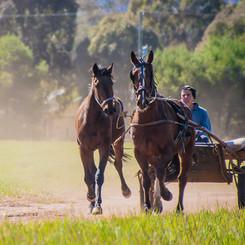 Horse Pre-Training at Clarinda Park Horses