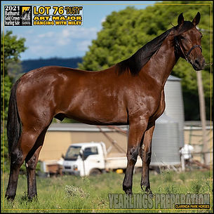Bathurst Gold Crown Yearlings Sale 2021 - Lot 76 (Art Major x Dancing With Miley)