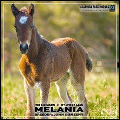 For A Reason filly out of My Lively Lass