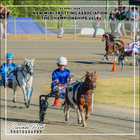 01 APRIL 2018 - NSW Mini Trots - THE CHAMPIONSHIPS 2018