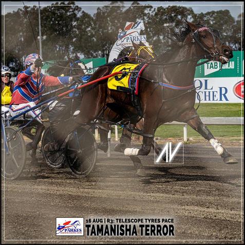 TAMANISHA TERROR, driven by MitchTurnbull, wins at Parkes Trots last 16 August 2020