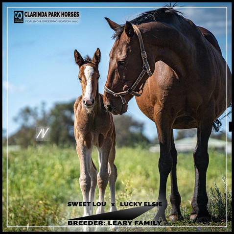 Sweet Lou filly out of champion mare Lucky Elsie
