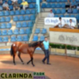 Clarinda Park Horses - Website Edit 03 -