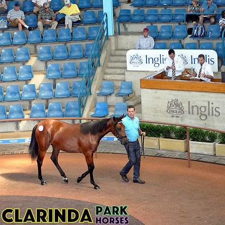 Clarinda Park Horses - Website Edit 03 -
