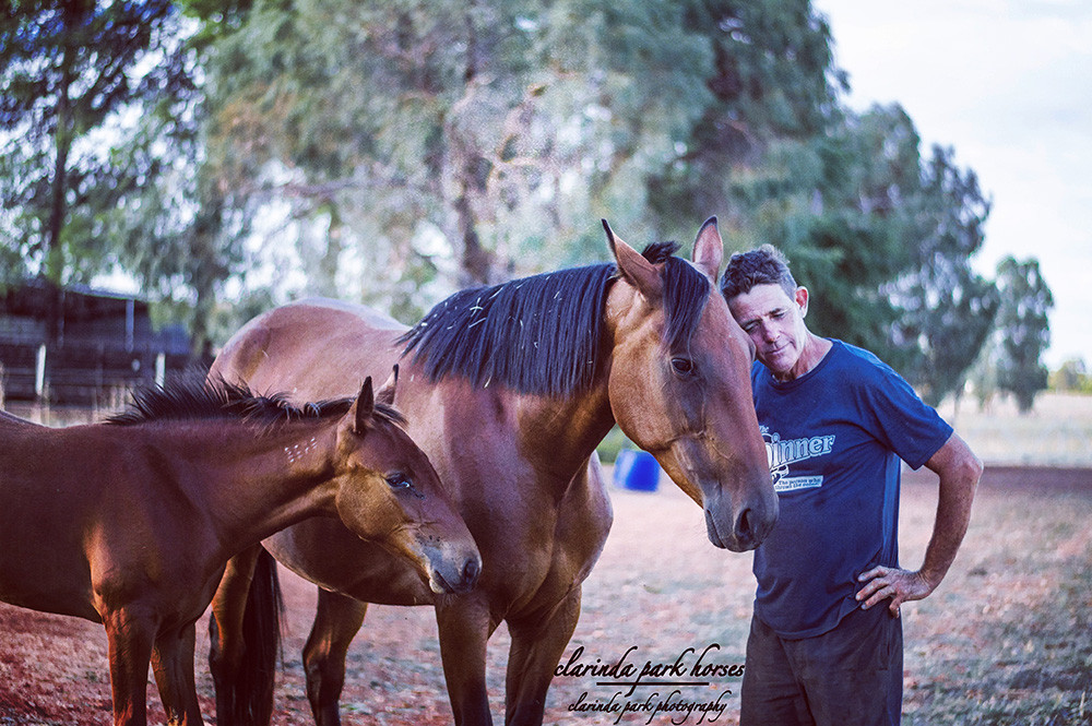 Naamah, Ark Elaine, Tony. Photo taken by Clarinda Park Photography. Horse photography.