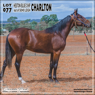 2019 Bathurst Gold Crown Yearlings Sale - Lot 077