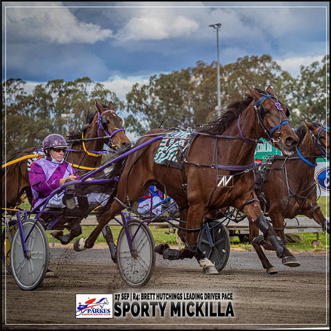 SPORTY MICKILLA, driven by Mark Hewitt, wins at Parkes Harness