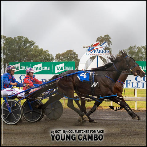 YOUNG CAMBO, driven by Jason Turnbull, wins at Parkes Harness