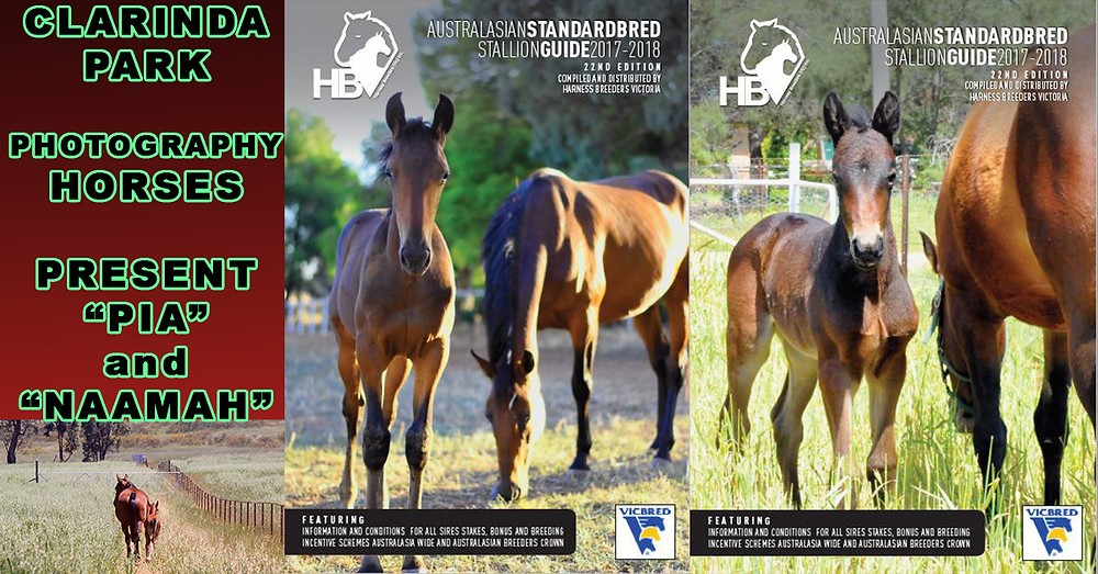 Foals and Mares Photos of Clarinda Park Horses are finalists in Harness Breeders Victoria photo contest. Photos Taken by Clarinda Park Photography.