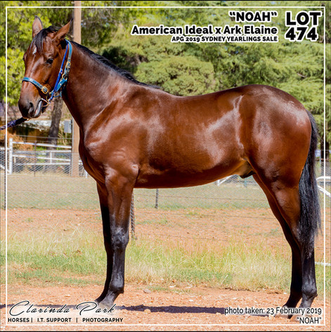 2019223 CLARINDA PARK HORSES - Yearling Sale 2019 - APG 2019 - Noah - 3rd Bath - 005