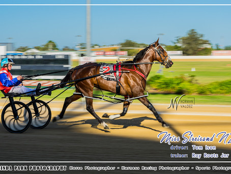 Newcastle Harness Racing Club Winners on Race Meeting 01 December 2018