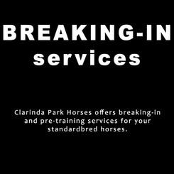 Breaking In Services of Clarinda Park Horses