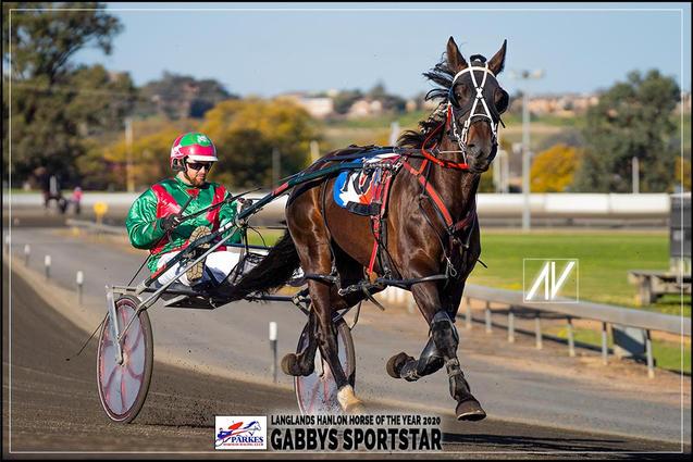 GABBY SPORTSTAR - Langlands Hanlon Horse Of The Year 2020