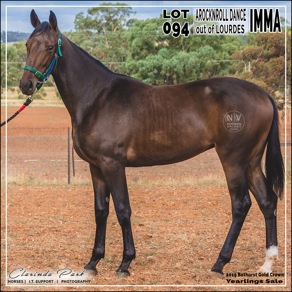 """""""IMMA"""", a filly by A Rocknroll Dance out of Lourdes. Lot 94 in 2019 Bathurst Gold Crown Yearlings Sale at Bathurst Harness Racing Club."""