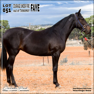 2019 Bathurst Gold Crown Yearlings Sale - Lot 051