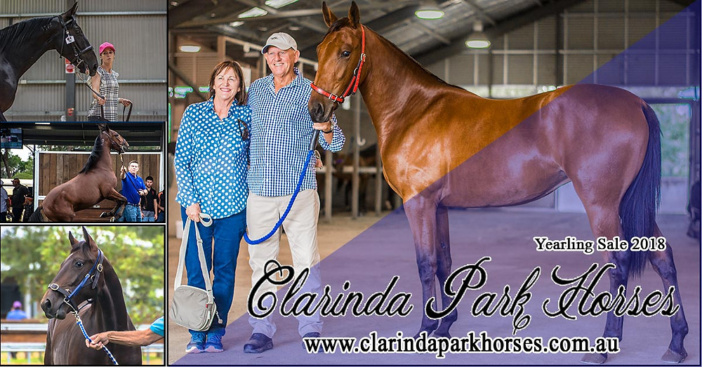 Clarinda Park Horses APG Yearling Sale 2018 and Goldcrown Bathurst Yearling Sale 2018