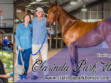 CLARINDA PARK HORSES Had A Good Result This Yearling Sale 2018