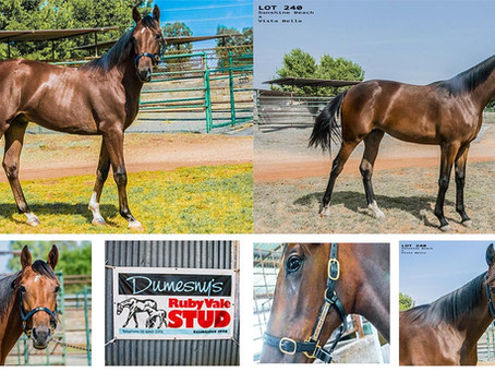Dumesny Goes To Melbourne For APG Yearling Sale 2018