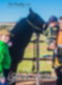 Clarinda Park Horses Foal Handling services.