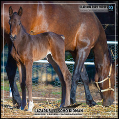Lazarus filly out of Soho Kidman