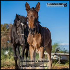 Million Dollar Cam colt out of Walk On Kimmy