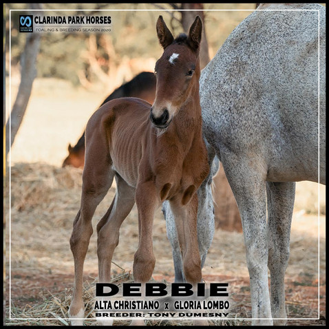 Alta Christiano filly out of Gloria Lombo