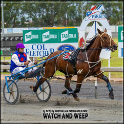 WATCH AND WEEP, driven by Mitch Hutchings, wins at Parkes Harness