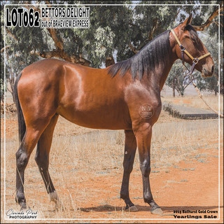 2019 Bathurst Gold Crown Yearlings Sale - Lot 062