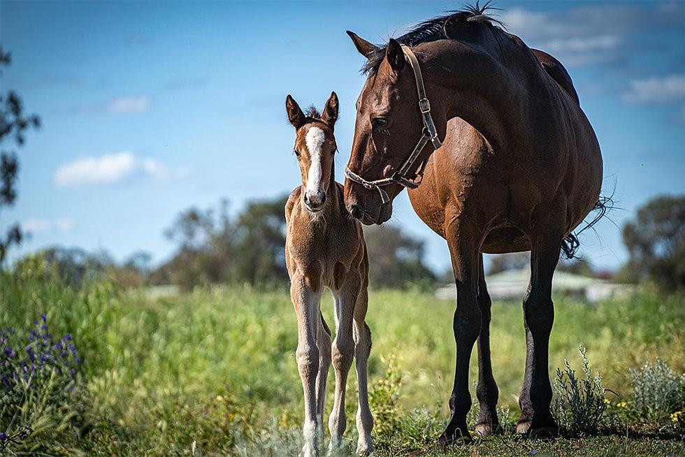 Foals 2020 - 09 - Sweet Lou x Lucky Elsi
