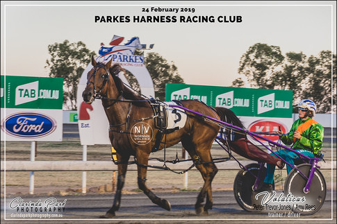 R4 TERRY BROTHERS CARPET COURT Pace - VOLATICUS - Amy Rees - 103