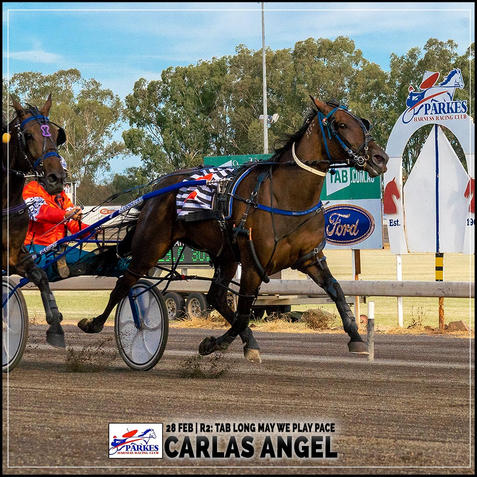 CARLAS ANGEL, driven by Phoebe Betts, won at Parkes Trots.