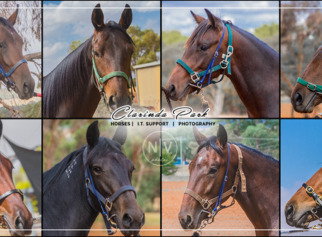 The 2019 Bathurst Gold Crown Yearlings Sale Yearling Draft of Clarinda Park Horses