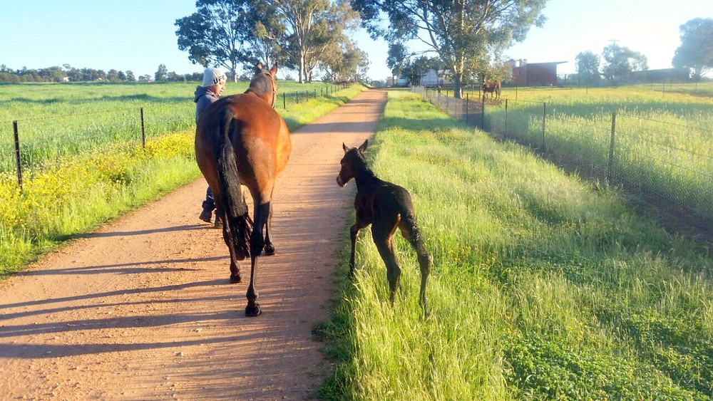 """Pia"" and her mare ""Soho Leigh"" few hours after birth."