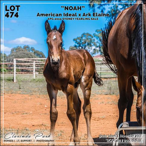 NOAH at 3 weeks old