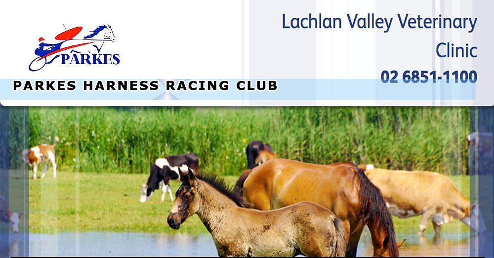 Lachlan Valley Veterinary Clinic To Host Gastroscoping Day on June 21 2017
