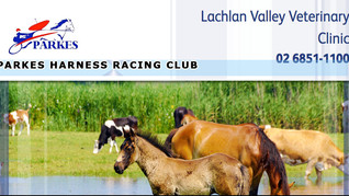Lachlan Valley Vet Clinic Holds A Gastroscoping Day on 21 June