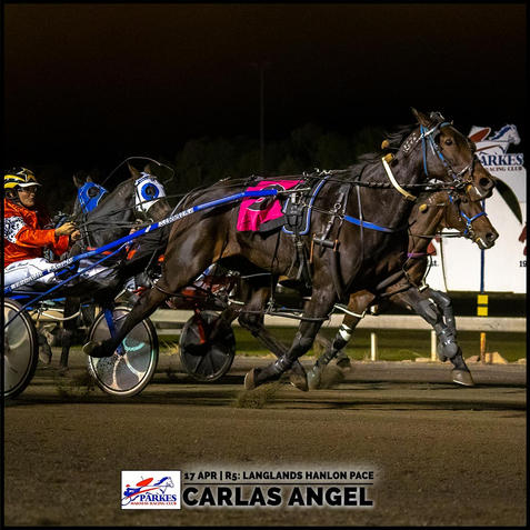 CARLAS ANGEL, driven by Abbie Howell, won at the Parkes Trots