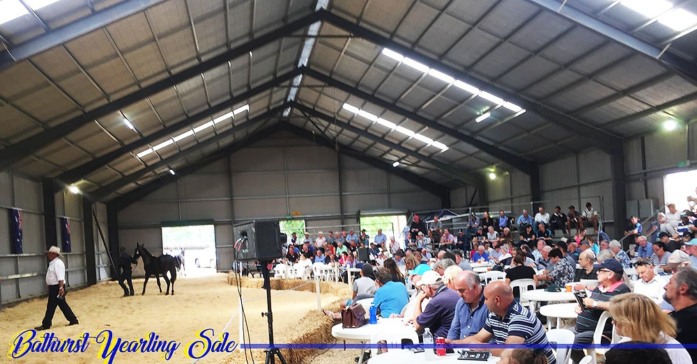 Bathurst Yearling Sale 2017 | Clarinda Park Horses | Clarinda Park Photography