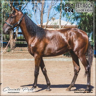 2019 Bathurst Gold Crown Yearlings Sale - Lot 004