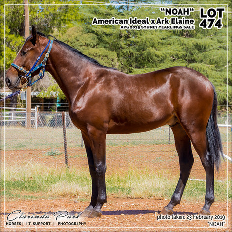 2019223 CLARINDA PARK HORSES - Yearling Sale 2019 - APG 2019 - Noah - 3rd Bath - 003