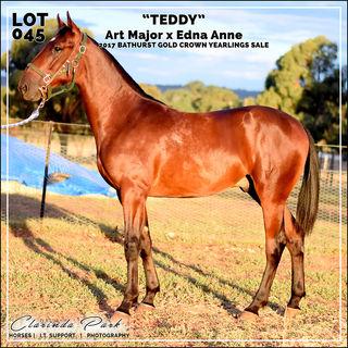 "2017 Bathurst Gold Crown Yearlings Sale - Lot 045 - ""TEDDY"" - Art Major x Edna Anne"